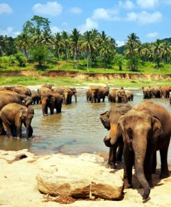 grand-tour-sri-lanka (4)