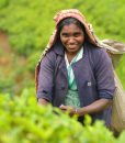 sri-lanka-culturel (2)