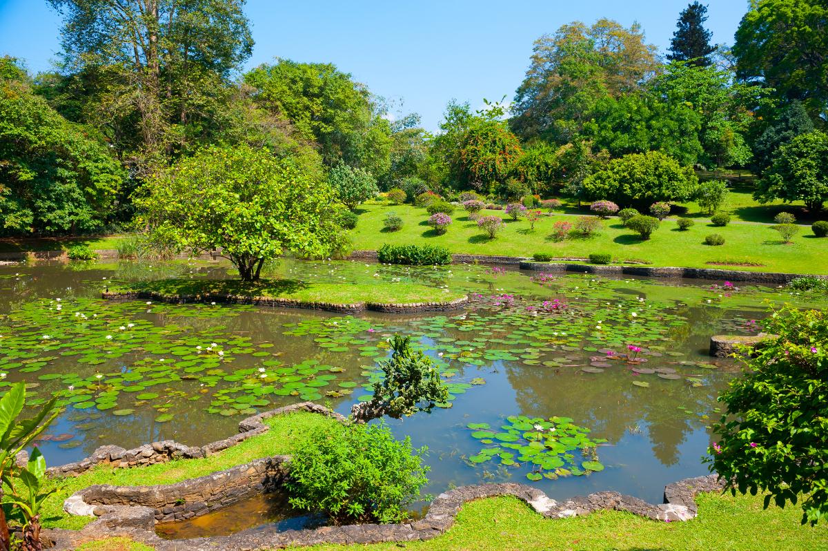 Voyage nuwara eliya sri lanka roads for Botanic com jardin