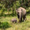 Yala-National-Park-SriLanka