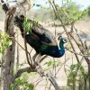Yala-National-Park-SriLanka2